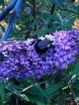 A bee….. near my head above myTree