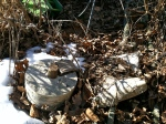 Closer view of base and bark of my Tree